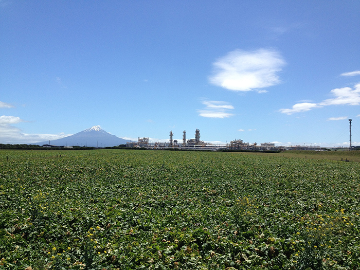 Lush green grass pasture with Kute Gas Plant and Mt Taranaki on the distant skyline
