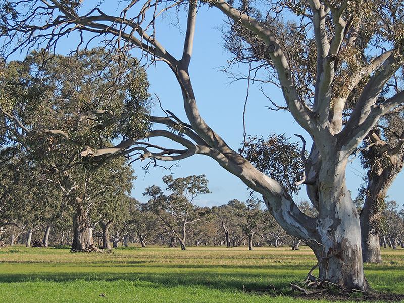 Otway Basin, South Australia